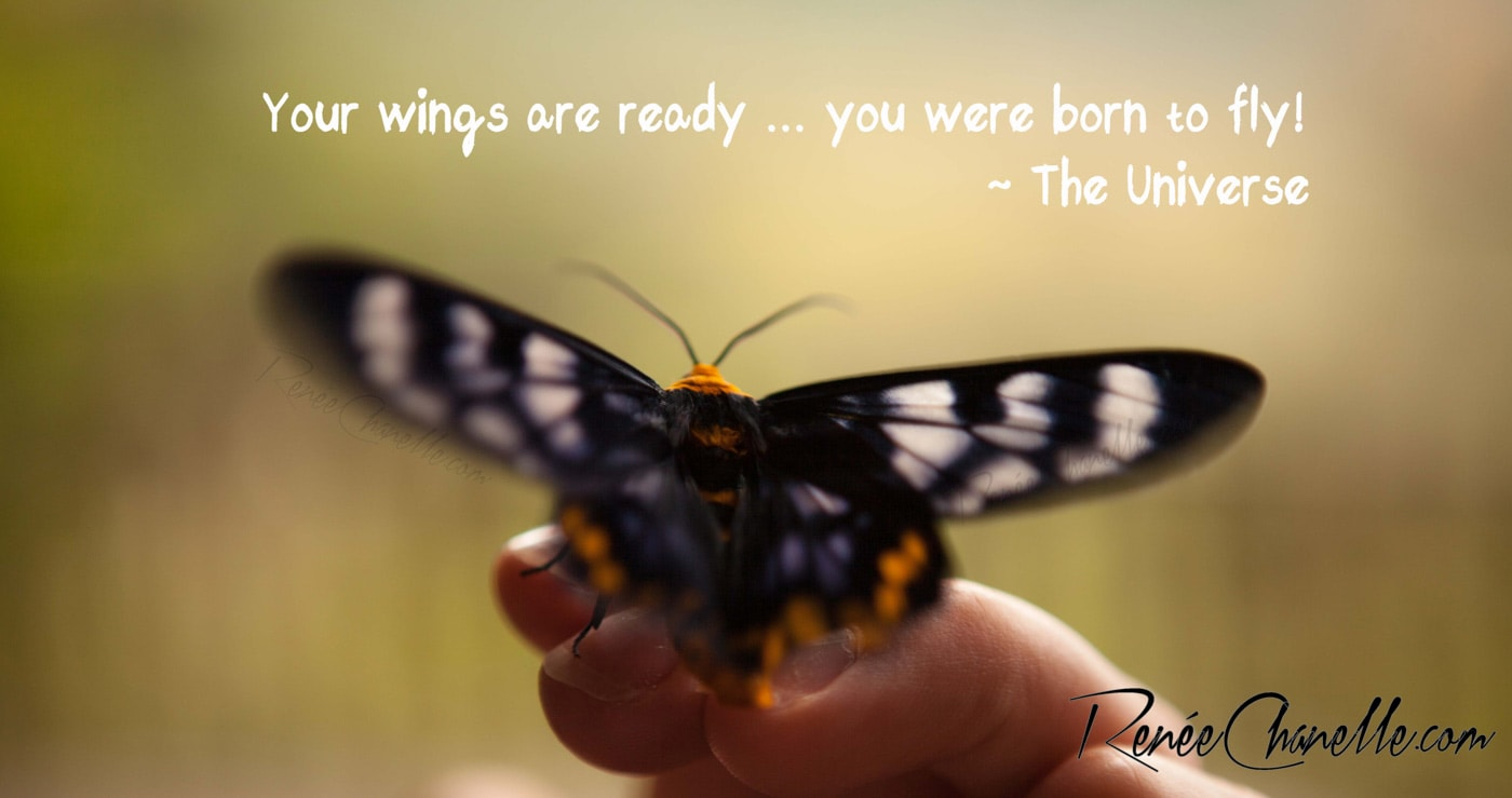 Your Wings Are Ready-RC